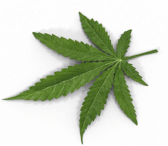 Marijuana-leaf-pot-weed-canabis